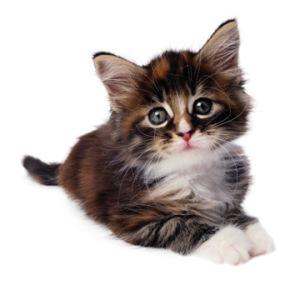katt år mot människoår